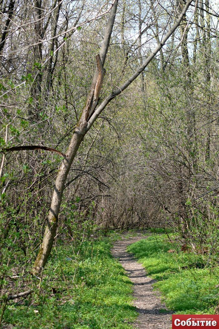 Лес и озеро (классное место для велопоездки 12 км от левого)