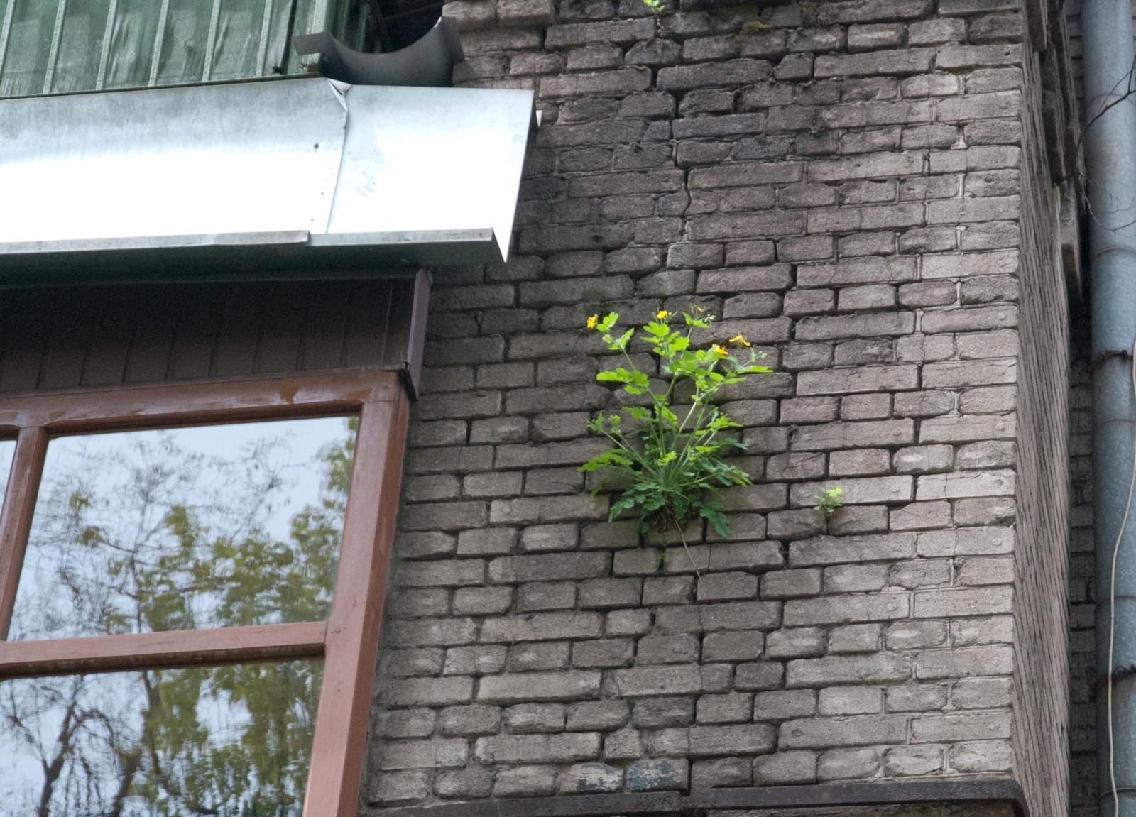 Растение в стене