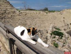 кошка в Кейсарии