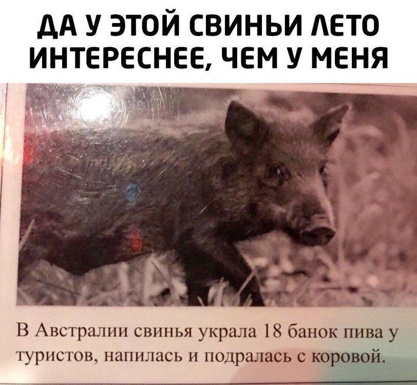 отдых свиньи.jpg