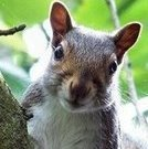 angrysquirrel