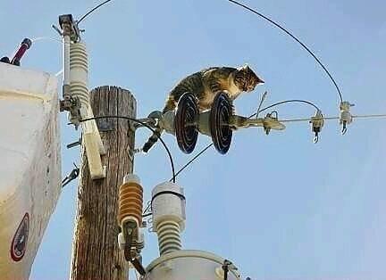 Кот электрик.jpg