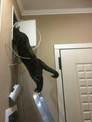 Кот-электрик.jpg