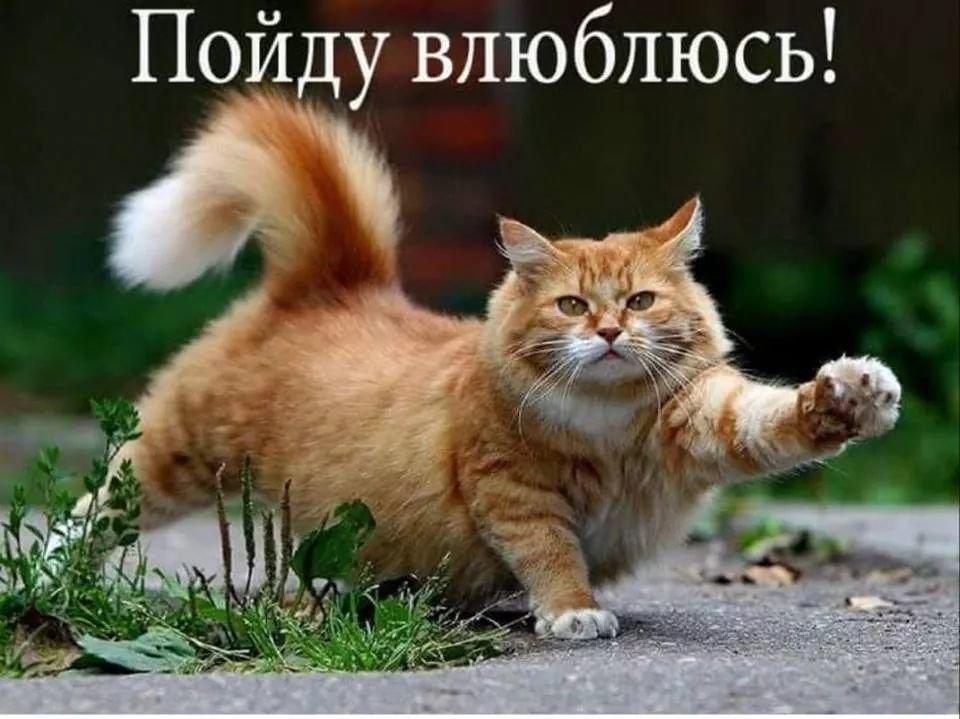 FB_IMG_1552624267489.jpg.ba0bdb8b5eabbf646be68035604c719d.jpg