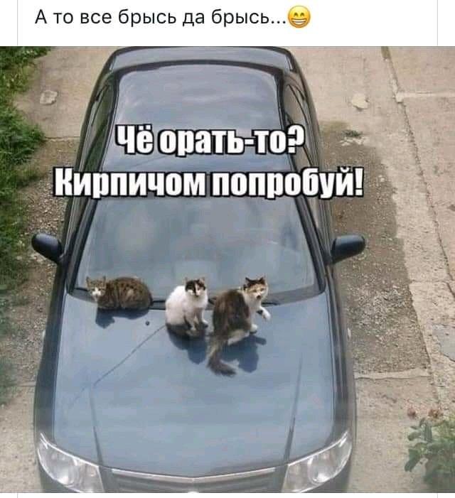 FB_IMG_15740761766043793.jpg